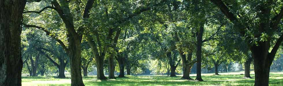 Parks Recreation Pecan Grove Municipal Utility District